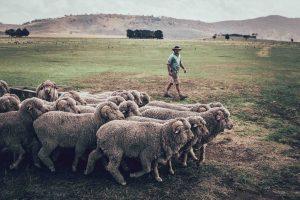 ORTOVOX to give away a piece of Tasmania — Merino Cool Wool