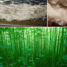Cynosura Consulting Partners with Industry Leaders to Establish a Sustainable Hemp Fiber Supply Chain in the US